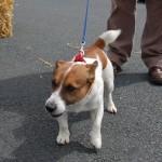 dogshow005