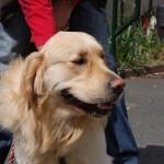 dogshow009