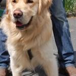 dogshow010