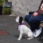 dogshow016