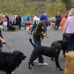 dogshow029