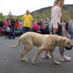dogshow032