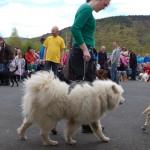 dogshow033
