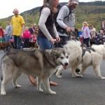 dogshow034
