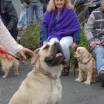 dogshow035