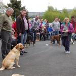 dogshow038