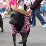dogshow052