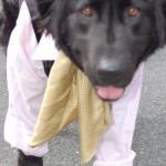dogshow053