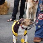 dogshow056