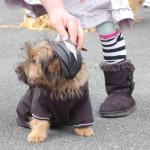 dogshow057
