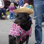 dogshow061