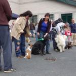 dogshow078