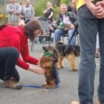 dogshow083