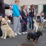 dogshow087