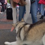 dogshow089