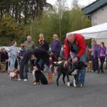 dogshow092