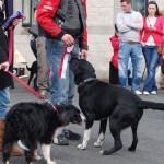 dogshow098