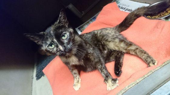 Citrus - Lovely Cat for Adoption