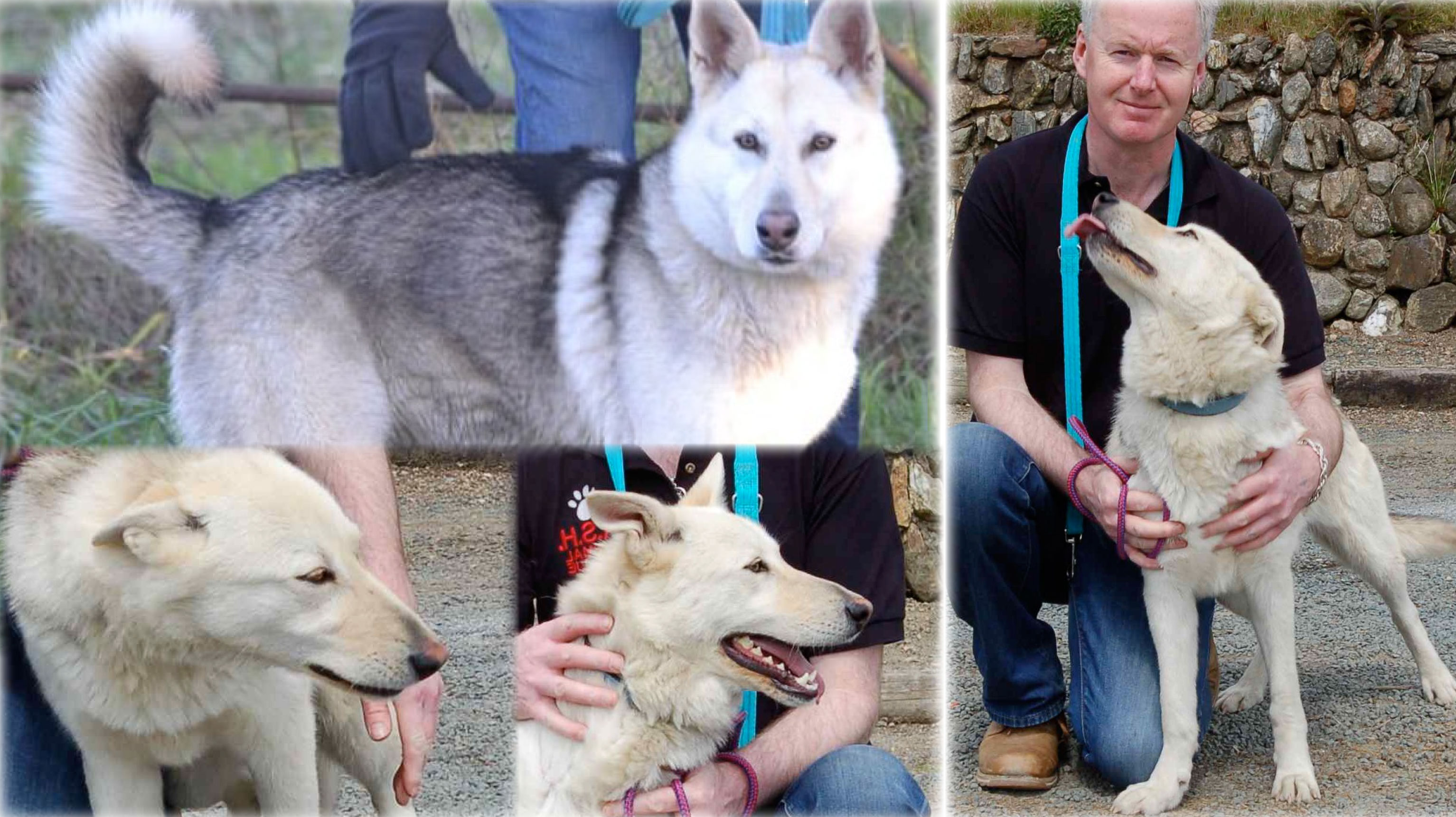 ASH Animal Rescue » Dogs looking for homes