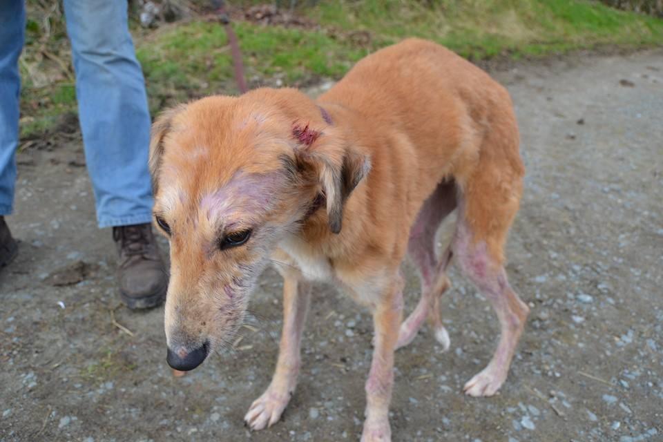 ASH Animal Rescue » News