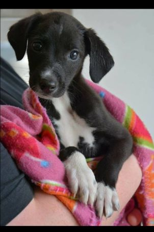 Rita - Puppy for Adoption