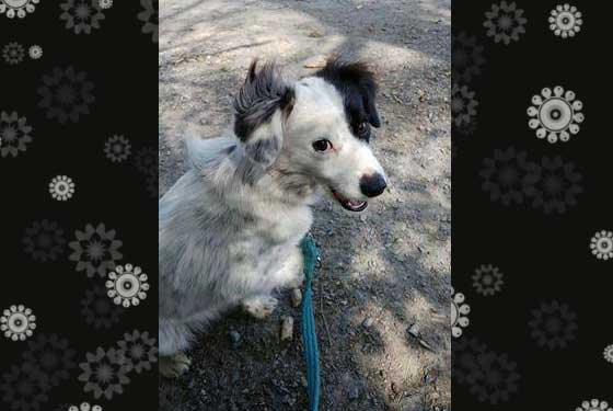 Holly - gorgeous lady for Adoption