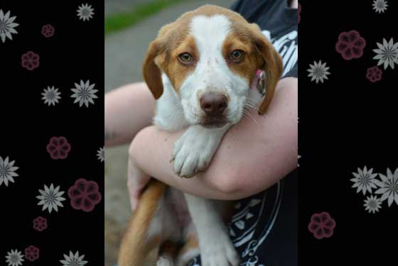 Nancy - puppy for Adoption