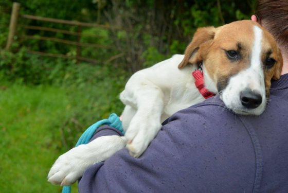 Summer - puppy for Adoption