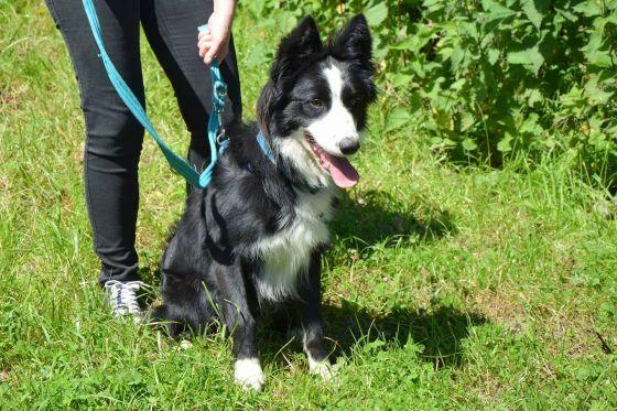 Milo - Dog for Adoption
