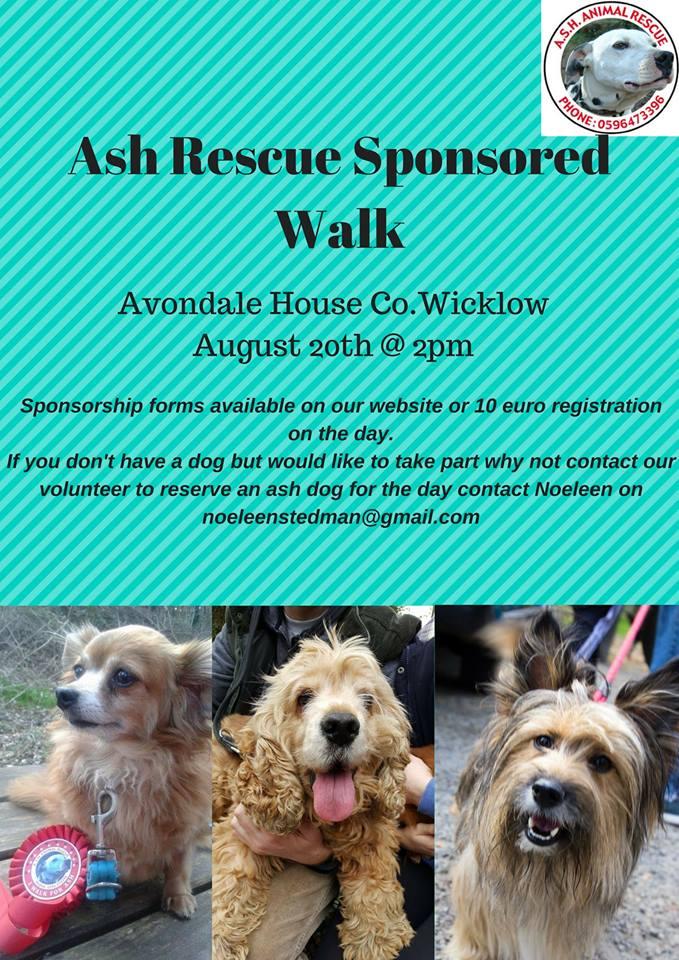 ASH Wicklow Dog Walk